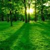بحث شامل عن البيئة