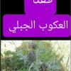ققنا. تسمی ققنا بالاشوریه _ العکوب الجبلی.
